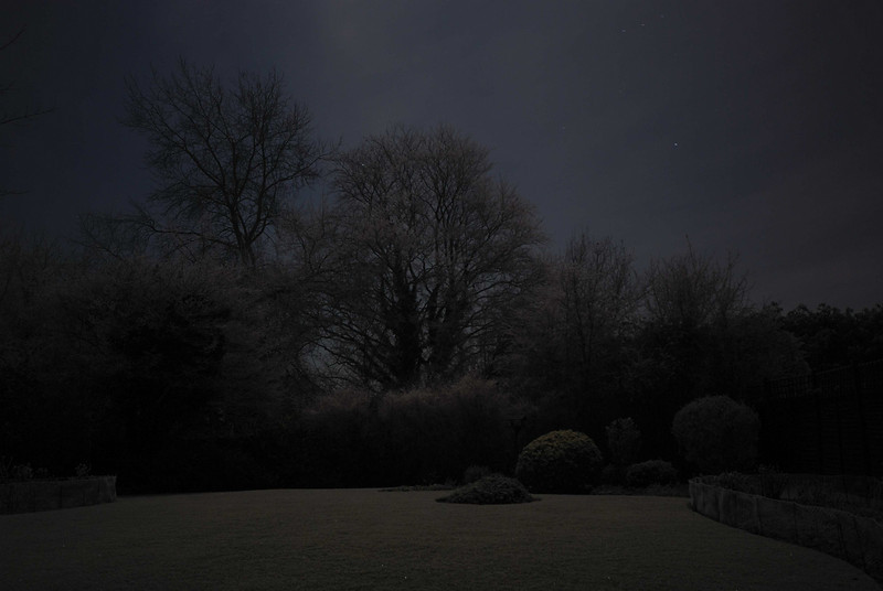 A Frosty Garden Abstract