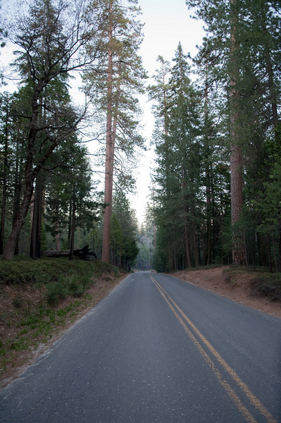 Looking down the road on our way to the campsite in Yosemite.