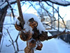 Tree seeds<br /> Winnipeg Canada
