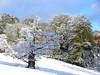 Aisholt snow 037