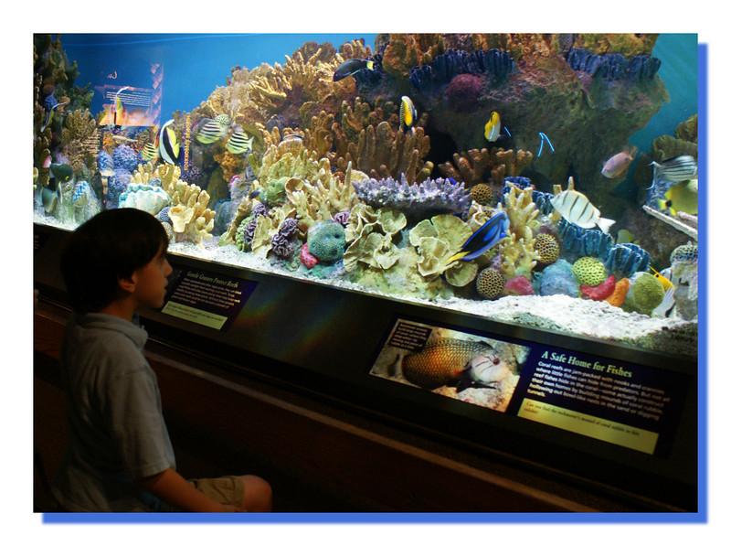 """""""Sean At The Boston Aquarium"""""""