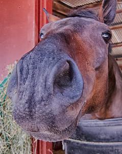 Horse -- Sonoma County Fair