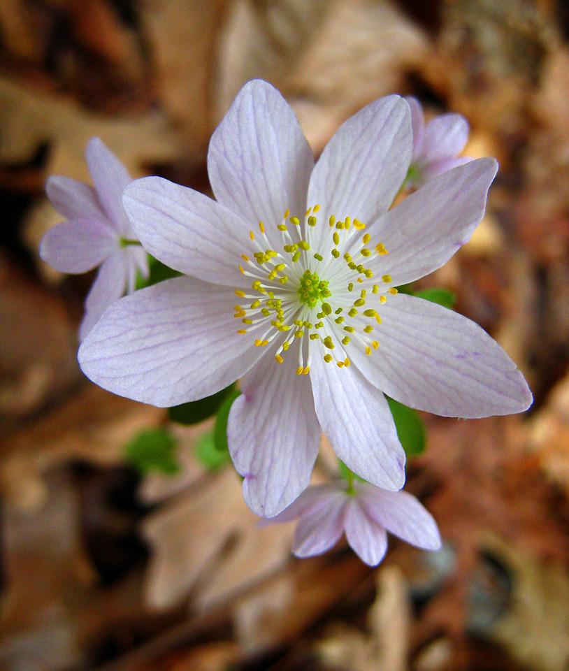 Spring Flower.