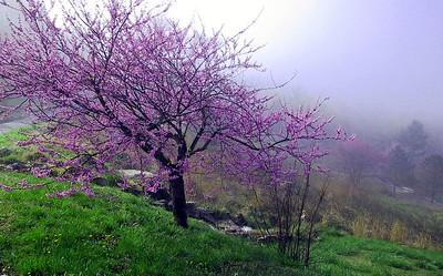 Spring. Missouri Ozarks.