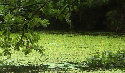 Pond. Missouri Ozarks.