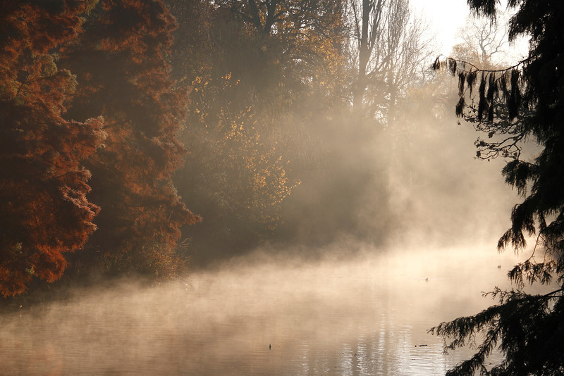 Profiles in the Mist
