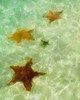 Four Starfish