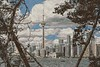 Toronto Skyline Through the Trees