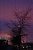 Blotchy Twilight