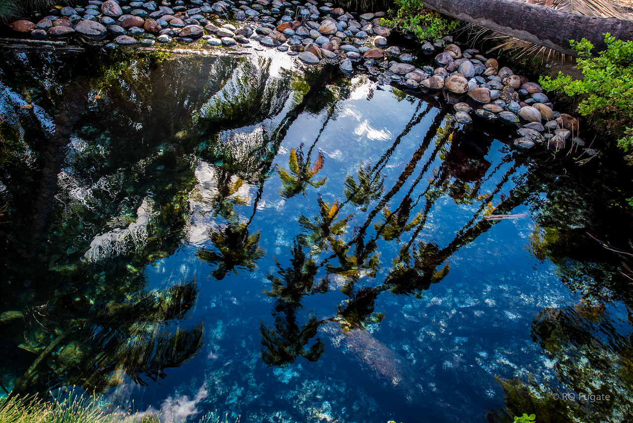 Tide pool reflection. Those are coconuts, not rocks.
