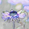 Photographer's Art: Flower