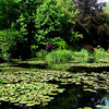 Lily Ponds in Monet's Carden in Giverny France