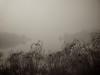 WPP2395 Foggy Day