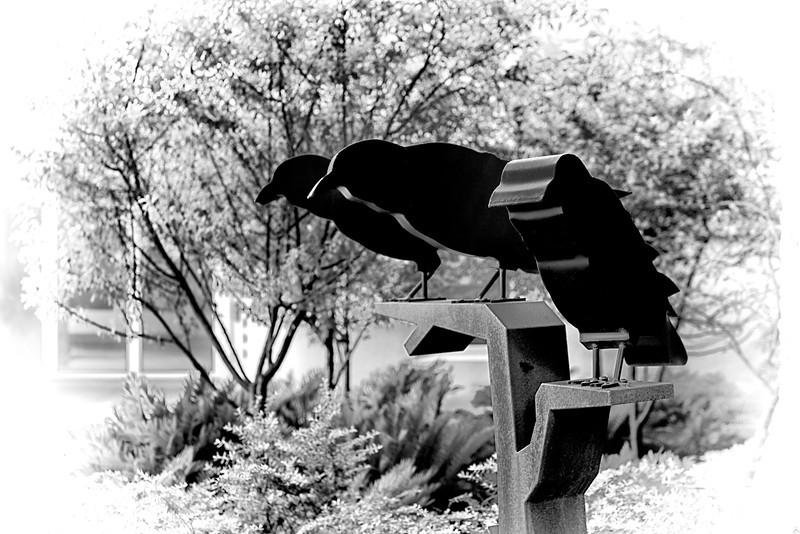 WPP2397  Black Birds