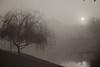 WPP2371  Foggy Morning