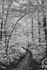 Pine Hills Nature Preserve - Indiana