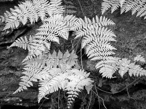 Portland Arch Nature Preserve - Indiana