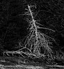 Maine-8840-Pano-Edit