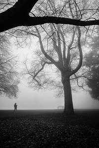 A women strolls through a foggy Hiawatha Park in West Seattle.