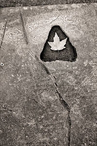 Found a metal street construction plate with a carved triangle with rounded corners in it. Placed a nearby leaf inside the triangle.