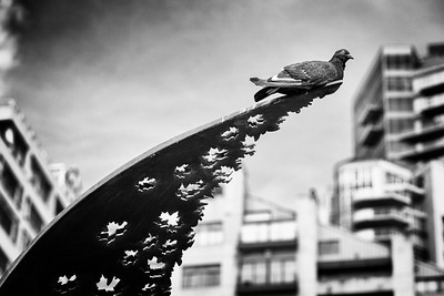 A pigeon perched on one tip of The Tree of Life (2012).