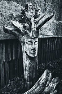 Carved driftwood in the shape of a sleeping head, West Seattle.