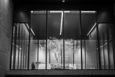 tree;building;glass;frame;inside;concrete