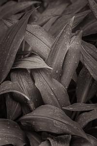 Weaver Plant