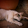 Smudge the Cat having a bit of a nap outside the front door.  Lumix GH1 with Lumix 20mm.