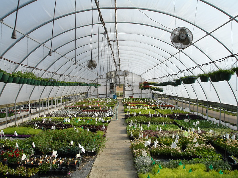 Taken inside a green house, Ks. 2007