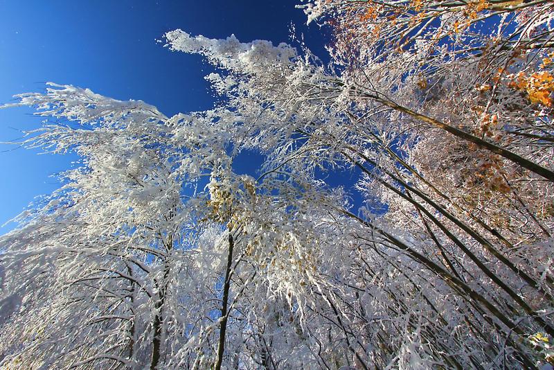 October 2011 Snowstorm<br /> Monroe, CT<br /> Image#:3875