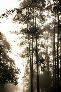 20140713_Morning Walk_007
