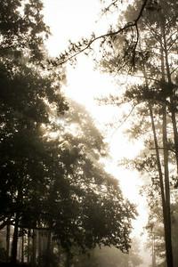 20140713_Morning Walk_005