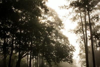 20140713_Morning Walk_006