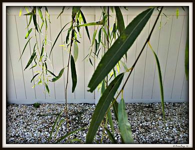 2012-09-14_11-18-41_HDR