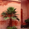 Courtyard flowers and ferns