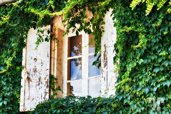 French window in Provence. - While traveling the south of France on the way to Monaco, we stopped at a small winery - I was impressed by the old french style building and I liked the light on this weathered window framed by ivy — so characteristic of this part of the world.  (ZZ) France, Provence