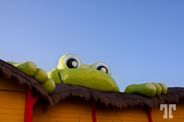 """19 Feb. 09<br /> <br /> I'm watching you!<br /> <br /> This is a the symbol of the """"Senior Frog"""" chain restaurant, very well known and popular in Mexico.<br /> <br /> The huge frog is sitting on the roof of the restaurant.  - February"""
