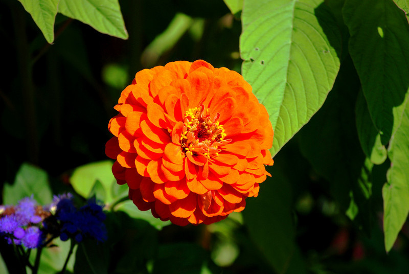 Vibrant Orange Flower<br /> <br /> Chicago, Illinois