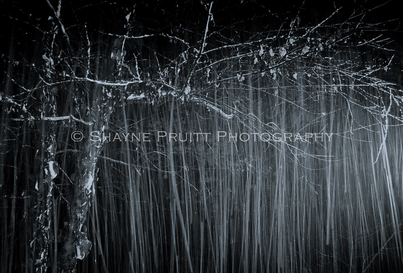 Falling Snow with a Long Exposure