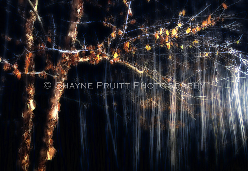Falling Snow with a Long Exposure. Won Best in Show, Dawson Arts Council  October 2011