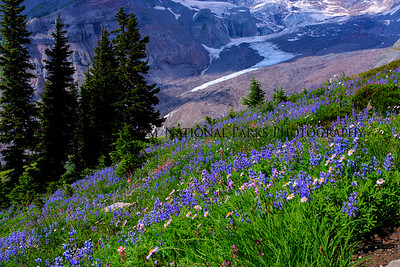 Flowers and Glacier (17 of 18)