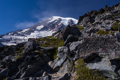 Mount Rainer Hidden (1 of 1)