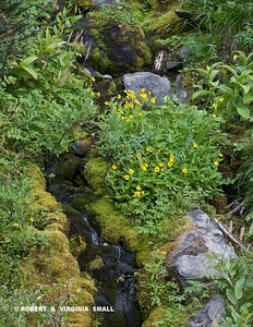 ANOTHER GLACIAL MELT RIVULET DECORATED WITH SPRING FLOWERS