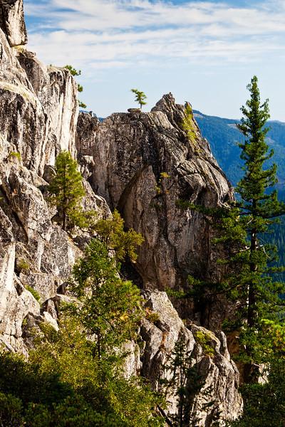 Tree in Granite at Castle Crags State Park, California