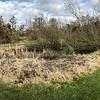 Multiplicity in Inveresk Lodge Garden