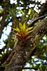 Bromeliads - Poas Volcano - Costa Rica (1) D copy