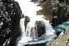 Point Lobos (147) D