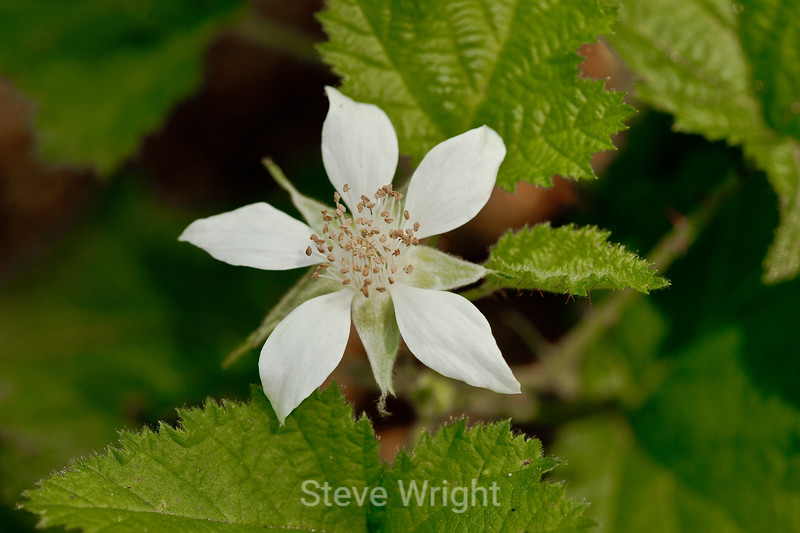 Flowers - Garrapata (1)