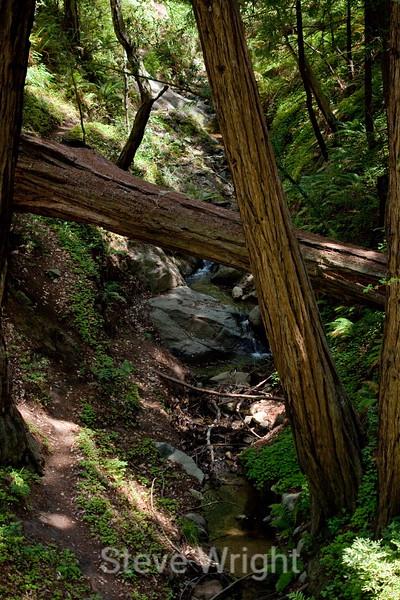 Sobranes Creek - Garrapata (55)